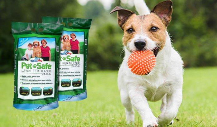 Best Pet Safe Weed Killers in 2021
