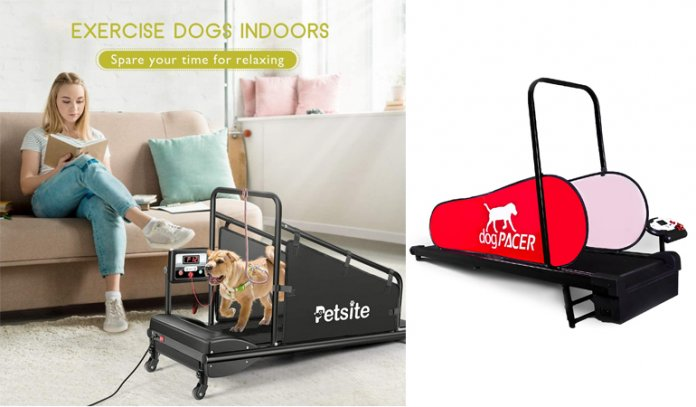 Review Best Dog Treadmills in 2021