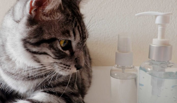 How to Make Cat Repellents at Home